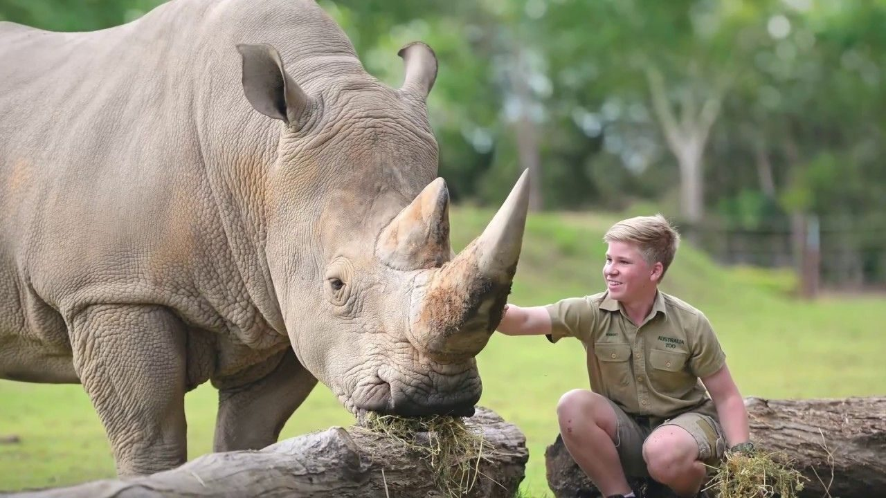 Save the Wildlife